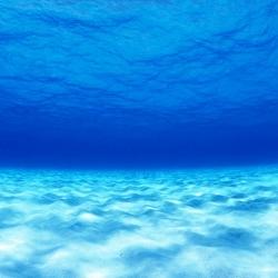 หัวน้ำหอม กลิ่นน้ำทะเล Aquatic Marine